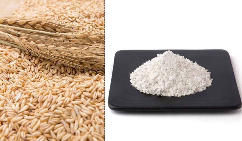 Oats Extract Avena sativa Extract