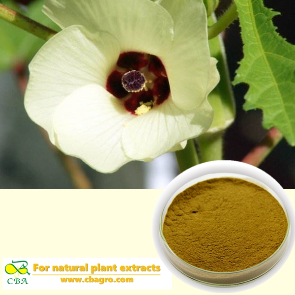 Okra Extract Pure Abelmoschus esculentus L.Moench, sexual wellness Okra Extract natural gumbo okra seed extract
