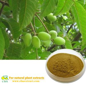 Natural olive leaf extract Camptothecin Hydroxycamptothecin