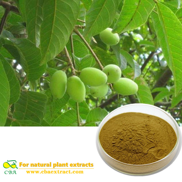 Natural olive leaf extract Camptothecin Hydroxycamptothecin