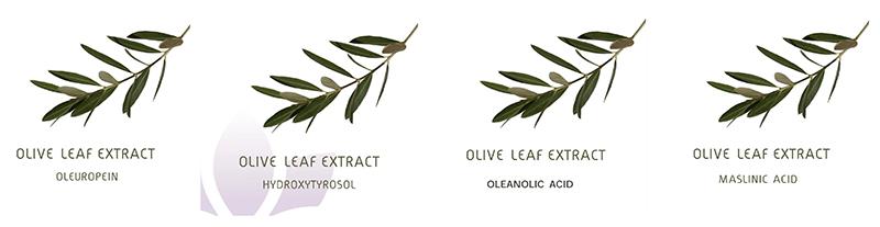 Olive Leaf Natural Bioactive Ingredients