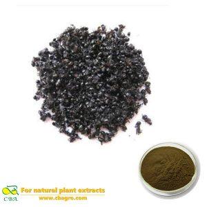 Organic Polyrachis Ant extract black ant extract powder black ant extract