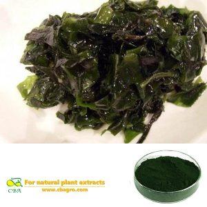 Organic Spirulina Bulk Pure natural Spirulina Powder