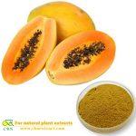 Papaya powder Papaya juice powder Papaya extract powder