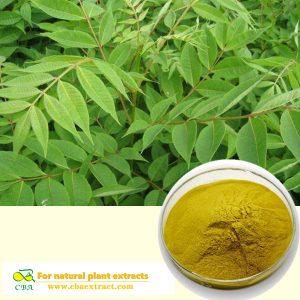 Berberine Organic Phellodendron Amurense Bark Extract Phellodendron bark Extract