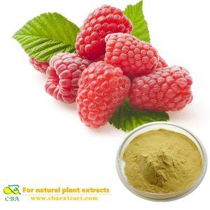 Natural Raspberry Extract -raspberry ketone for weight loss Rubus Chingii Hu Raspberry ketone