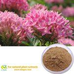 Rhodiola Extract Salidroside 3% ,Rosavin 3% Rhodiola rosea extract Salidroside Rosavin