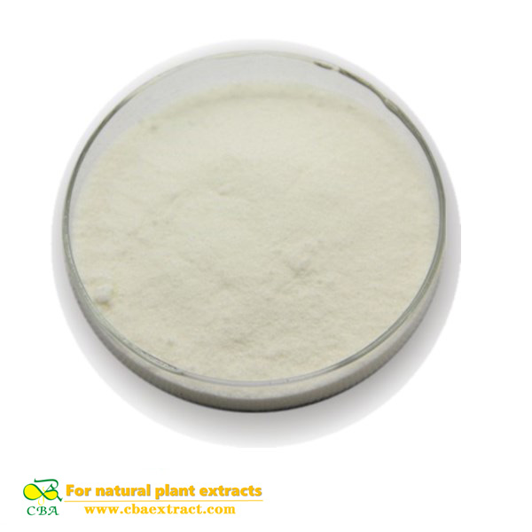 Competitive Price Food Additive -Rice protein