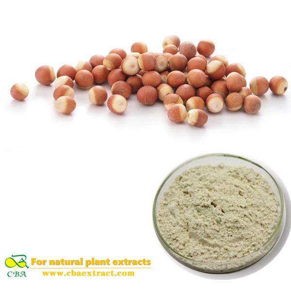 Semen Euryales Powder Gorgon Fruit Extract