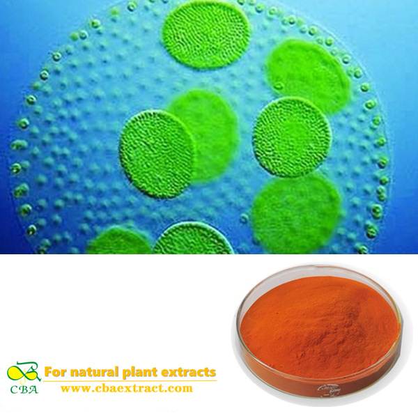 100% Natural Salt alga Dunaliella salina extract powder