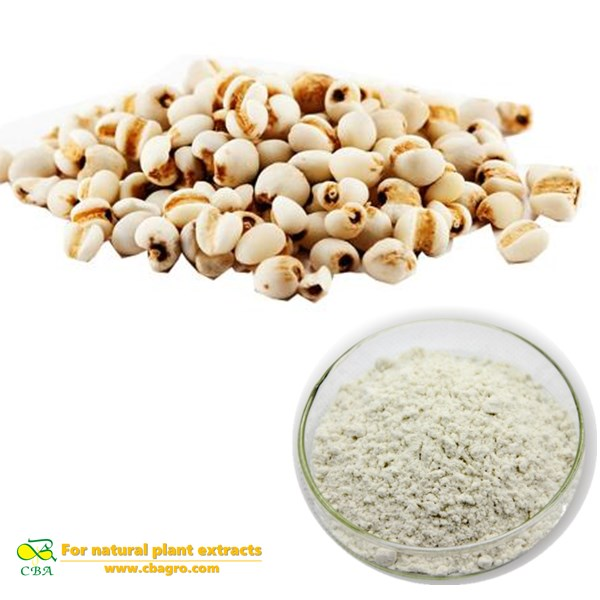 Semen Coicis Extract Coix Seed Extract Herb medicine Coix SeedSemen coicis