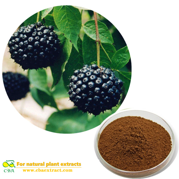 Natural Siberian Ginseng Plant Extract Acanthopanax Extract with Eleutherosides