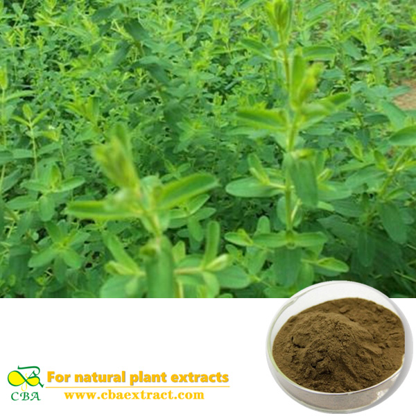 supply st. johns wort extract st.john's.wort P.E.plant extract hypericum perforatum extract Hypericum perforatum L.