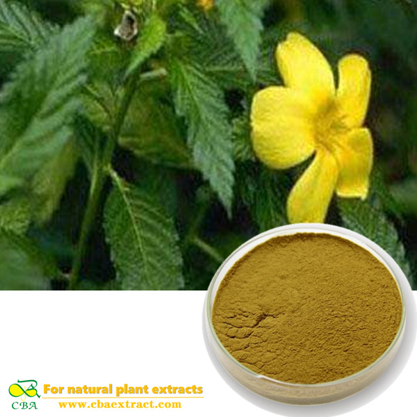 Supplier Provide Health Products Damiana Leaf Extract