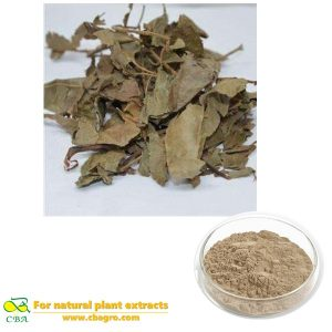 Supply Best Quality Cyclocarya Paliurus Extract