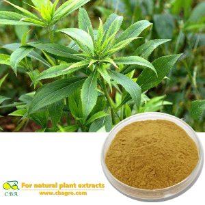 Swordlike Atractylodes extract Atractylodesroot powder Atractylodes Rhizome extract Cure low white cell plant extract