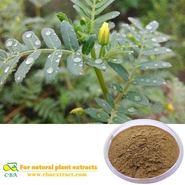 Pharmaceutical Ingredient 90% Tribulus Terrestris Extract Tribuloside Pharmaceutical Ingredient