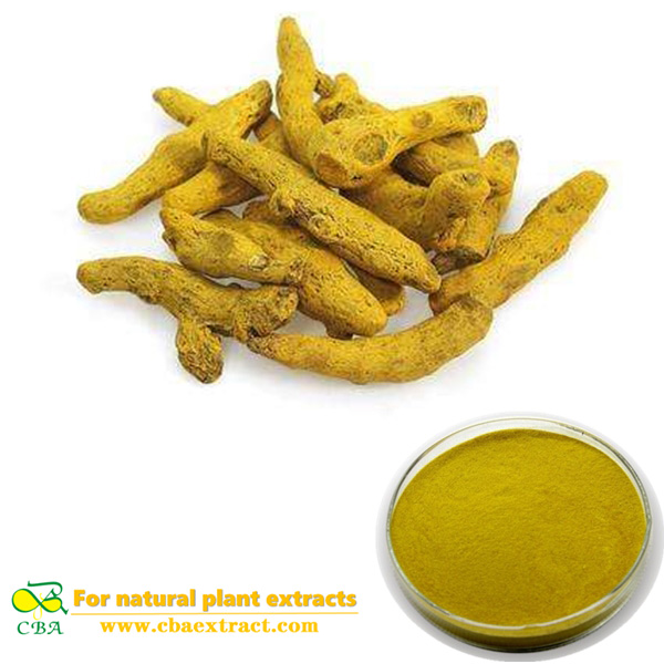 Turmeric Extract turmeric root extract powder 95% curcumin Food Additives Organic Turmeric Powder