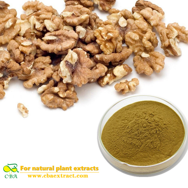 Walnut seed Extract Chinese fruit extract Semen Juglandis Extract English walnut seed Extract