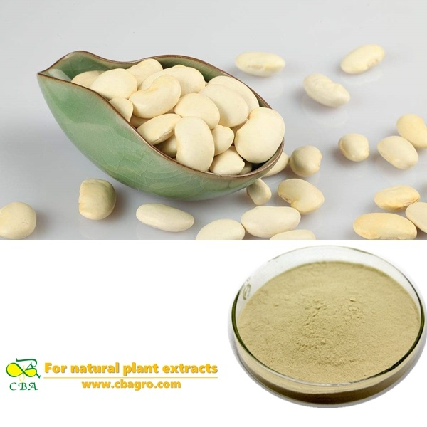 Weight loss product White Kidney Bean Extract Phaseolin,51,101,201 Phaseolus Vulgaris Bean Extract