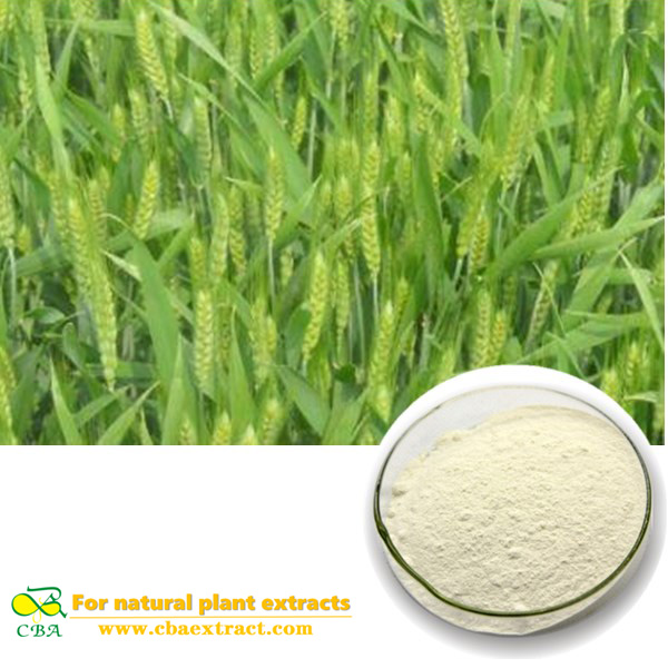 High Quality Wheat Oligopeptide With Good Price