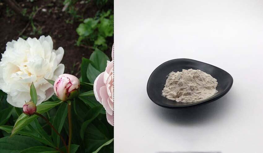 White Peony Extract Paeonia lactiflora P.E.