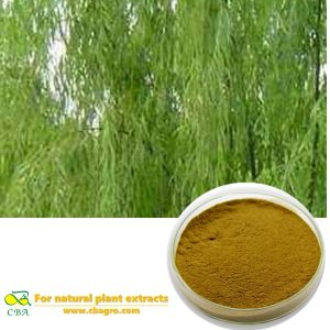 White Willow Bark Extract Salicin Powder Salix Alba L.