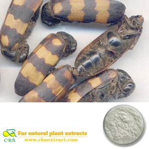CBA 2018 Blister Beetle Mylabris Extract