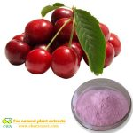 Organic Acerola Cherry extract Powder