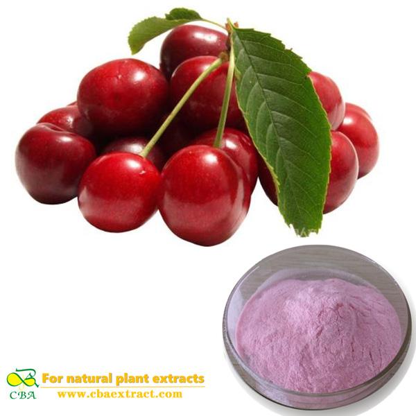 Organic Acerola Cherry extract Powder