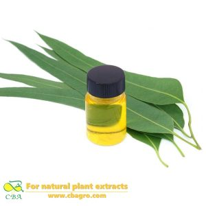 cosmetics grade natural eucalyptus essential oil