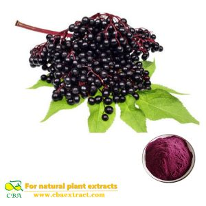 Elderberry Powder Extract