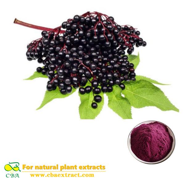 Elderberry Powder Extract