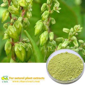 high quality japonica rutin bulk,sophora japonica rutin extract