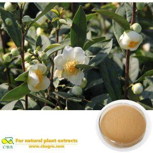 plyphenols 40% jasmine green tea flower extract