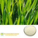 WHEAT GRASS EXTRACT Triticum aestivum powder vitamin K flavonoids