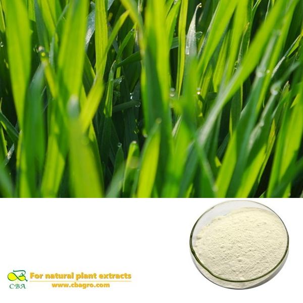 WHEAT GRASS EXTRACT Triticum aestivum powder vitamin K flavonoids